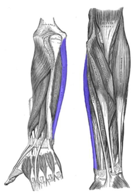 dolore al gomito interno il gomito golfista punti trigger