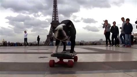 tower dogs skateboarding dogs at eiffel tower trocadero