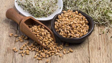 alimentazione macrobiotica macrobiotica significato cosa mangiare e