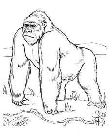 gorilla coloring pages free coloring pages of g for gorilla
