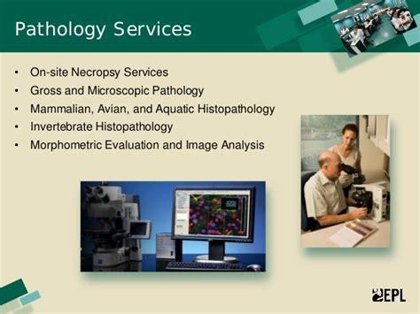 epl inc experimental pathology laboratories inc epl