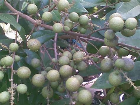 Pupuk Pemicu Pertumbuhan Bunga Vitagrow Buah panduan tehnik agrobisnis pertanian pupuk alami