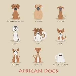 how to breed dogs breeds find out which breeds originated in africa