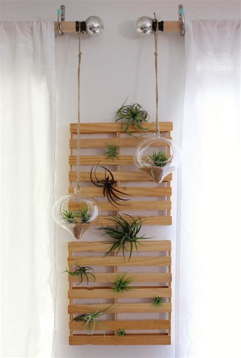 more air plants a giveaway at home in love