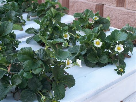 plants at home build your own home hydroponic systems