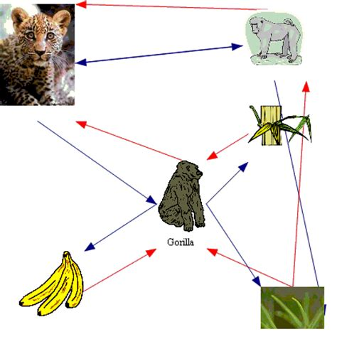 chimpanzee food chain diagram butzinfrishman12 grace s cycle research