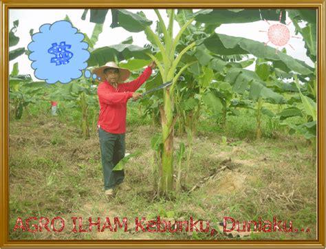 Barbel Kaki pokok pisang kaki animated gifs photobucket