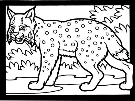 coloring pages of canadian animals free lynx coloring pages