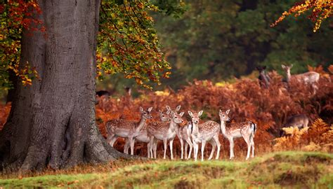 7 Gorgeous Animal Prints For Fall by 500px 187 The Photographer Community 187 30