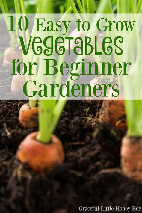 vegetables easy to grow 10 easy to grow vegetables for beginner gardeners