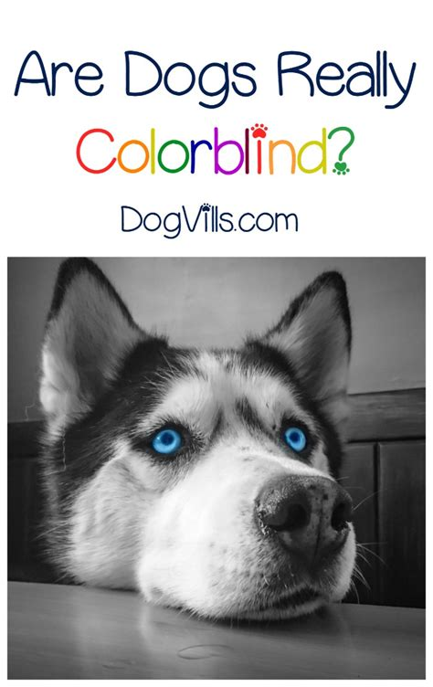 are dogs colorblind is it true that dogs are colorblind dogvills
