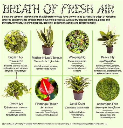best houseplants for air quality common indoor plants that improve air quality diy to do