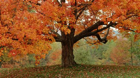 fall trees wallpaper 1920x1080 5304