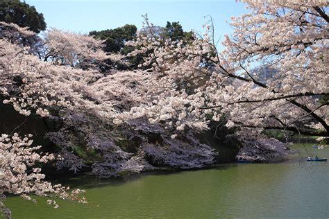The Conoe Chiyoda Tokyo Japan Asia 東京の絶景 牛ヶ淵 九段下 から千鳥ヶ淵の桜を観に行こう デートにも最適 tokyo23 東京の絶景
