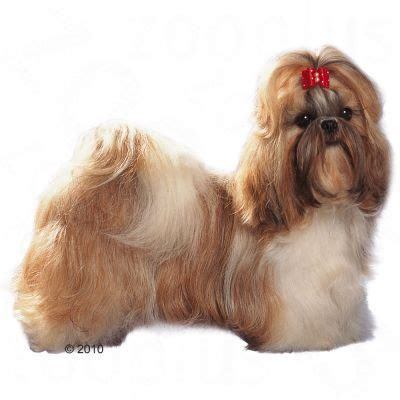 shih tzu adults royal canin breed shih tzu hondenvoer zooplus nl
