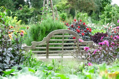 dahlia bench salutation dahlias bench middlesized garden the middle