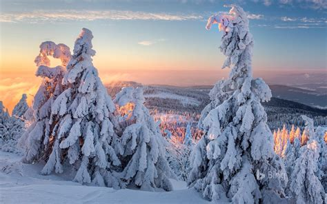 germany bavaria winter forest morning  bing preview