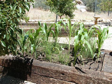 Desert Vegetable Garden Asparagus Asparagus Officinalis Arizona Vegetable