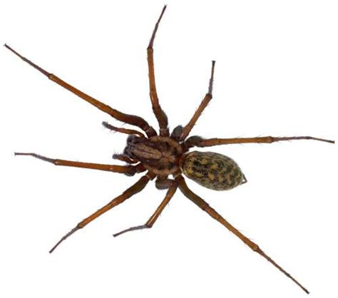 how do you get rid of spiders in your house how to get rid of spiders kitchensanity