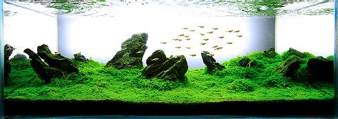 aquascape plants list easiest freshwater plants for beginners aquarium info