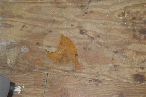 how to get rid of squeaky hardwood floors prepping to lay engineered wood flooring loving here