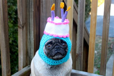 pug puppy birthday happy happy birthday cake hat made to order