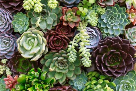5 mistakes you're making with your succulents growing