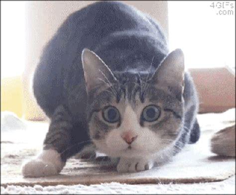 imagenes gif animadas chistosas gifs de gatos chistosos imagenes chistosas