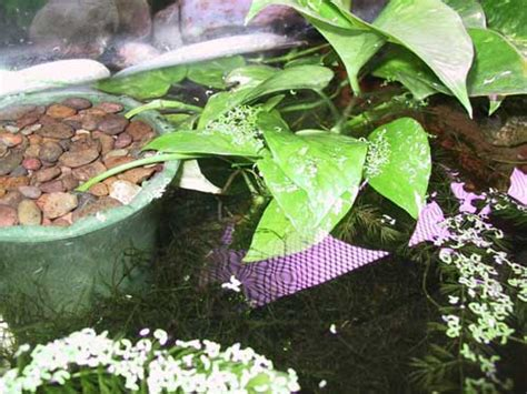 plants    aquariums  terrariums