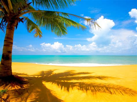 imagenes de paisajes en la playa palmera en la playa fondos de paisajes