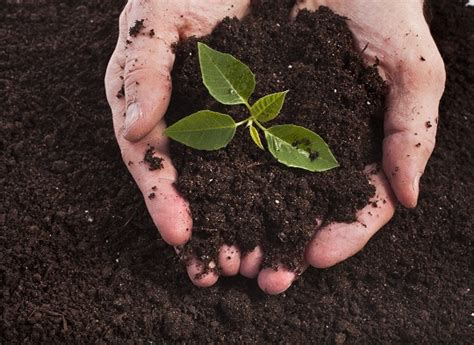prepare plants for nitrogen rich soil to get a beautiful