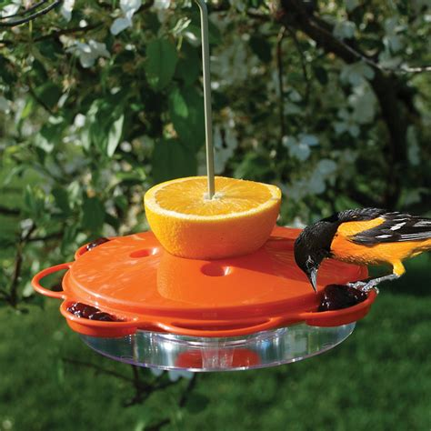 woodlink wlo1 plastic oriole feeder atg stores