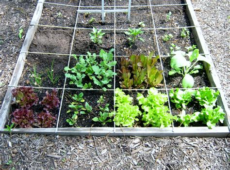 Square Garden by Plantings Square Foot Garden Update Minding P S With Q