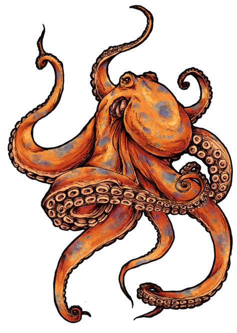 squid tattoo designs octopus tattoos designs and pictures octopus