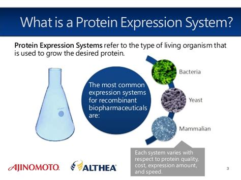 protein expression recombinant protein expression systems images