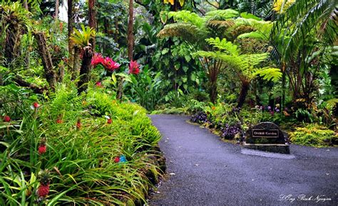 Hilo Botanical Garden Orchid Garden Hawaii Tropical Botanical Garden Hawaii Photo Bach Nguyen Photos At Pbase