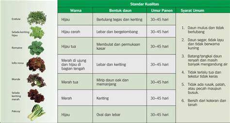 Harga Bibit Sawi Dan Kangkung tabel cara menanam dan masa panen beberapa sayuran bob s
