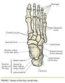diagram of the foot bones december 2011