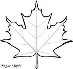 maple leaf coloring page maple leaf printable clipart best