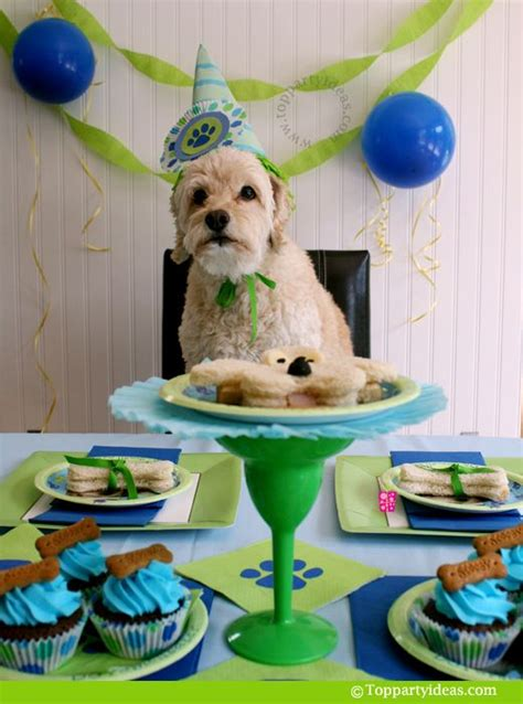 Birthday Surprises For Your Pet by 60 Best Cape May Dogs Birthdays Images On