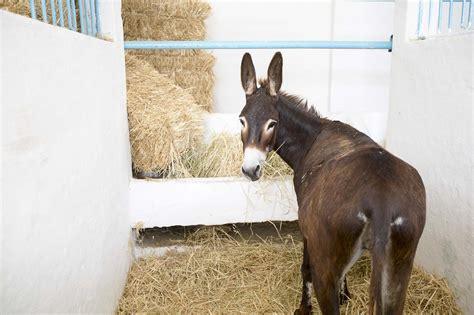 donkeys eat spana