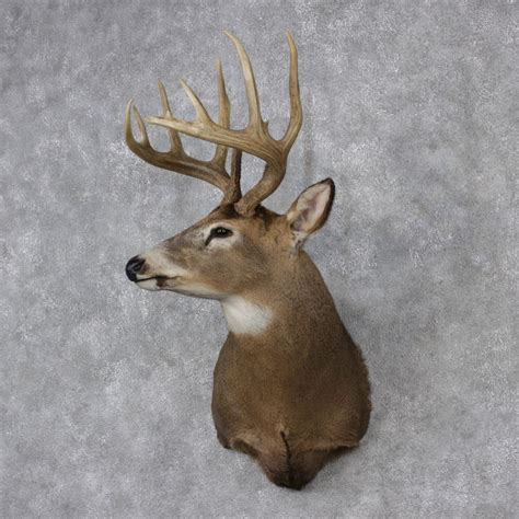 deer head white tailed deer buck head www pixshark com images