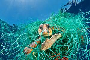 Discarded fishing nets can entangle and drown turtles.