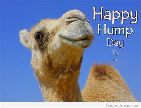 Happy Hump Day by Happy Hump Day Amazing Images Pictures Sayings