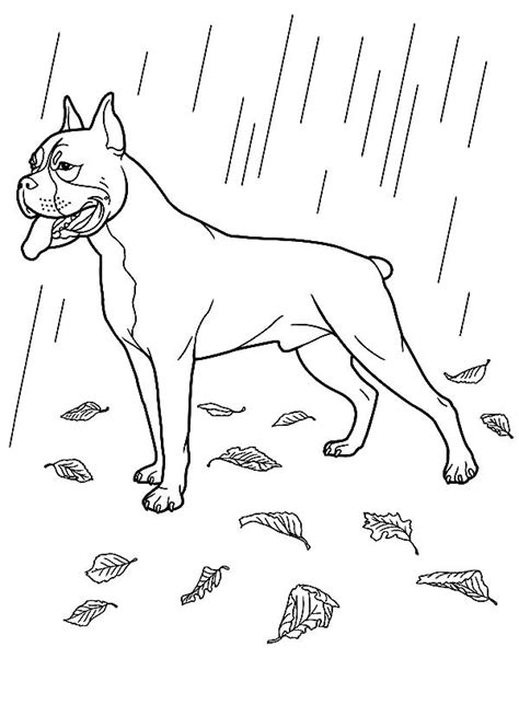 coloring pages of boxer dogs boxer coloring pages
