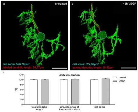 frontiers dendritic cell plasticity in frontiers morphological plasticity of emerging purkinje