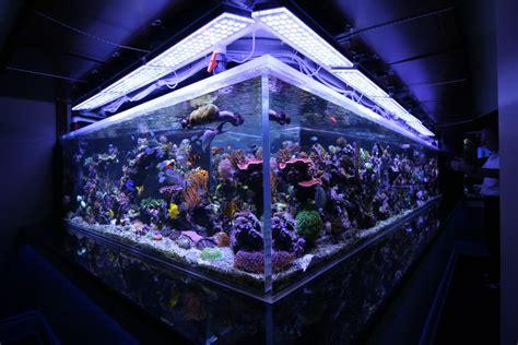 saltwater fish tank lights saltwater tank mixed reef 1350 gal orphek led lighting