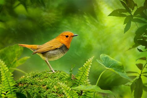 35 and beautiful birds photography