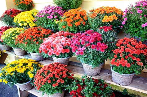 What To Plant In Your Fall Flower Gardens Fall Flower Gardening