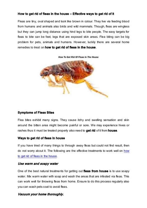 fleas in house how to get rid of fleas in the house
